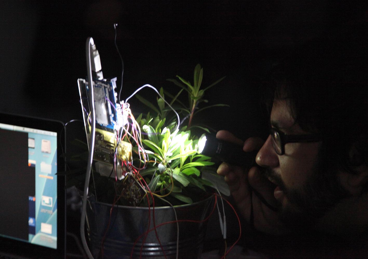 Concierto fotosintético