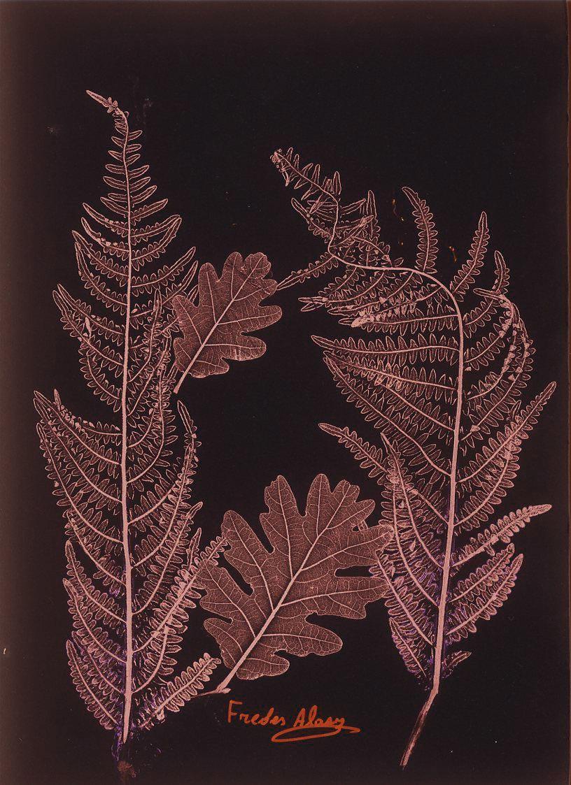 Herbarium_Percepción y memoria II